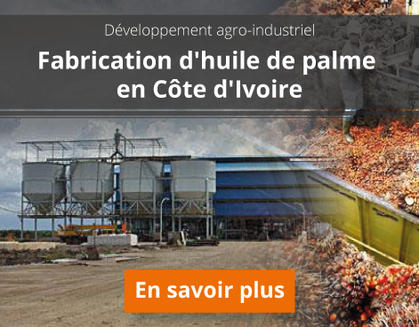 production-huile-de-palme